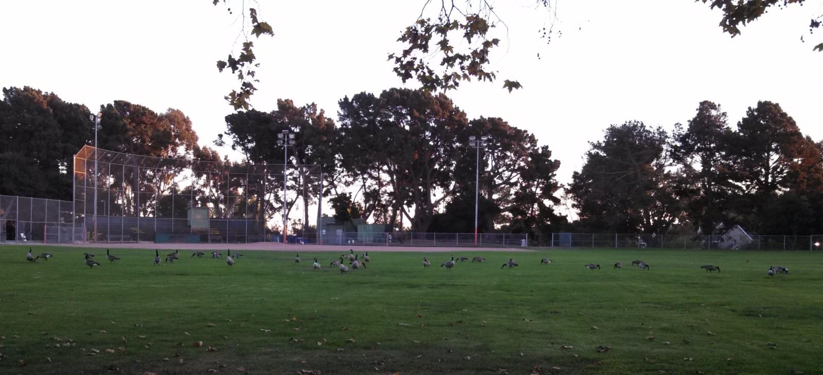 alameda-baseball