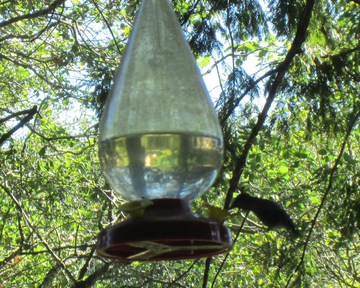 colibri-abreuvoir